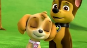 The Skye and Chase - PAW Patrol Club