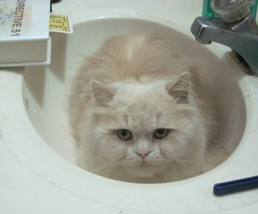 Remus sitting in the sink