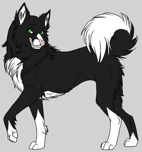 Name:Spirit Age:18 Gender:female Fur:black fourrure but white underbelly Eyes:forest green Rank:Omega