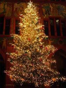 beautiful tree!!!