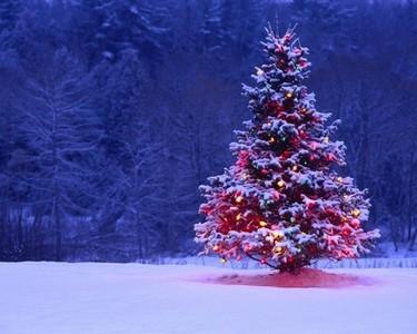snowy pokok