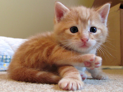 My paborito color cat is ginger like this kitty! Are you madami of a cat person or a dog person? Or