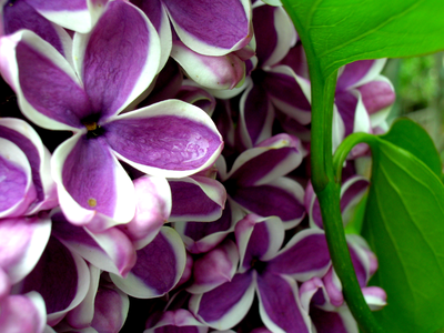 Lilac. I also like red, black and white though. And yellow. Same question!