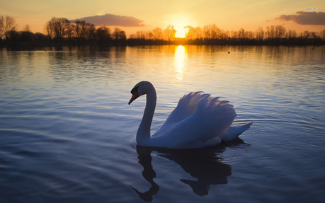 The Swan. Same question.