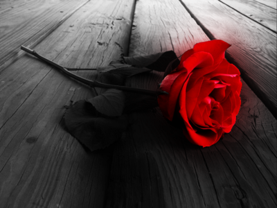 My lucky item of today: a rose :3