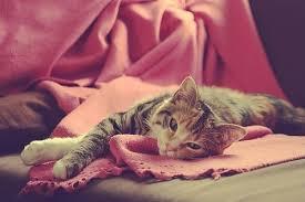 Yaaayyy!! I got a blanket today!!!