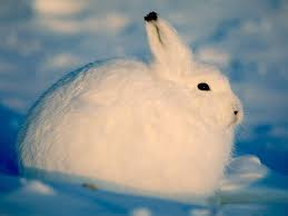 "Later.... ""You said you were going to teach me about snow hares,"" Said FrozenPaw. ""Yes, yes,"" B"