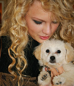 tay with a dog I want taylor dancing :)