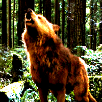 Theme 1: [url=http://www.fanpop.com/clubs/werewolves/picks/results/1292108/10in10-icon-challenge-roun
