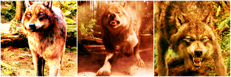 Category: [url=http://www.fanpop.com/clubs/werewolves/picks/results/1292114/10in10-icon-challenge-rou