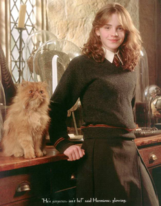 crookshanks. (and Hermione)