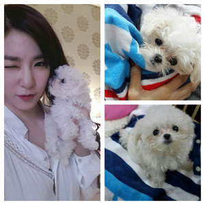 Tiffany with a dog. I command a चित्र of Taeyeon in any commercial.
