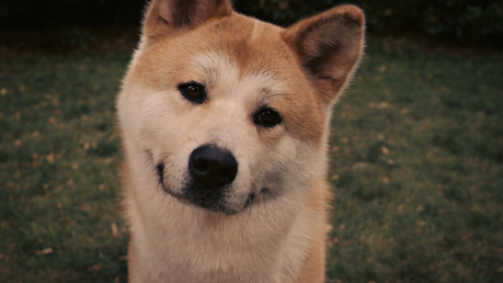 {ROUND 8 // H} Hachi: A Dog's Tale (2009) /// ~ greathopes