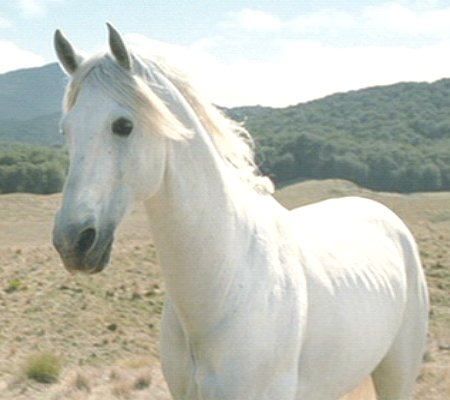 {ROUND 22} Shadowfax from The Lord of the Rings: The Two Towers (2002) // rosemina