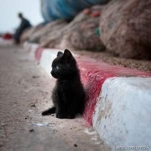 [b]Round 3: Black Kitten[/b] [u][b]Participants:[/u][/b] isabellagirl033 falliNgSparks poulamik