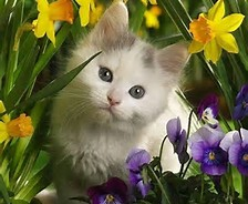 Hi Dear Friend. tu say tu have a amor of animales :) What is your favourite animal and do tu hav
