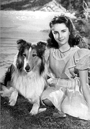 Lassie Come প্রথমপাতা :)