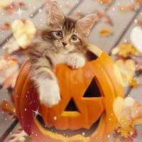 アイコン 3.....a cute kitty