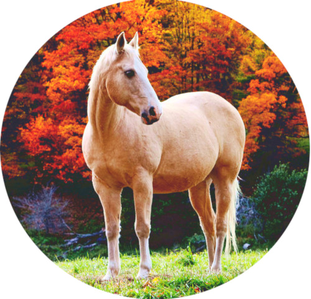 Horse in autumn (edited 의해 me)