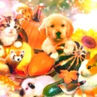 아이콘 2.......Autumn sweeties