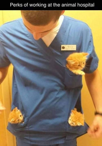I thought this was so precious and beautiful! *Oh the feels!* 💖 I want kittens in my pockets!!!!