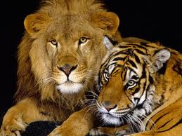 Both lions and tigers are my favorites, cuz I just love them.