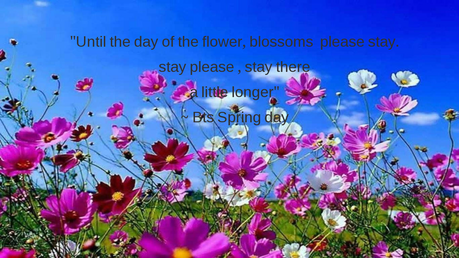"i tried, but this is a quote. ""Until the dag of the flower, blossoms please stay. stay please, stay"