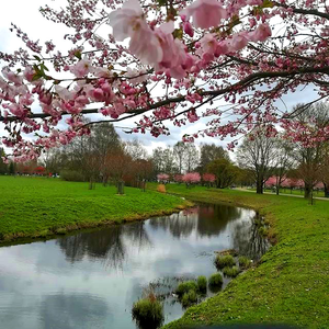 This is a foto I took last jaar near my university. I loooove sakuras. In my mind they perfectly rep