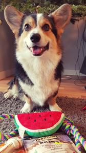 dag 02: Animals ✒ My dog Kleks ✒ All other animals... I just love them!