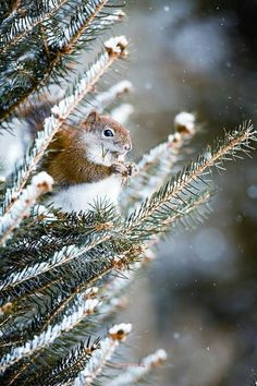 uwu a squirell in snow *melting away*-*⛄❄️