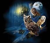 Beautiful Owls 🕊️🌸