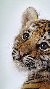 Tiger kitten awee!!!🧡