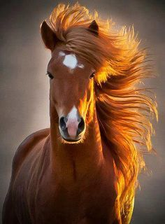wow*-*🐴 and I want this hairs lol