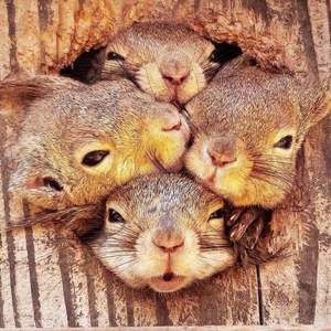 What a cute family!