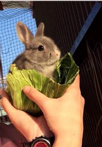 Please don't make a rabbit salad!