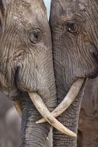I just l'amour elephants!