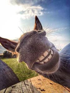 Donkey selfie time!