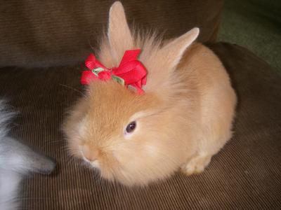 bunny rabbits, my fourth favori animal