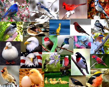 birds, my third favori animal, I like cardinals, swans, & lilas breasted rollers are my absolute fa