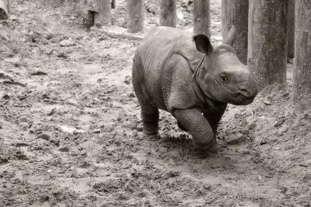 rhinoceros.............