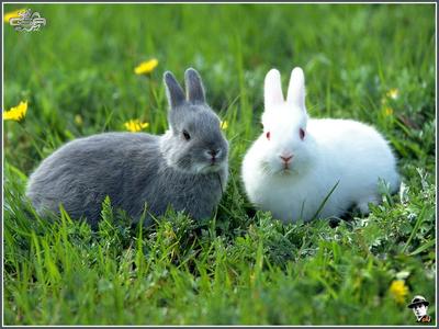 rabbit............