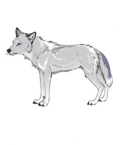 Name: Arrow Gender: Female Age (In WolfYears): 14 fourrure color: Light gray, dark gray, some black,