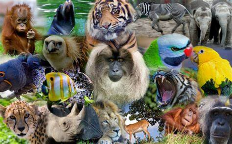 Post all your favori animal photos and vidéos here, and see what others have to share!