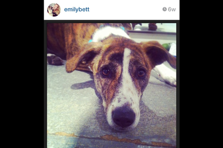 Ok, how much do आप like Emily? I really प्यार her. She's a very good actress. I follow her on Instagr