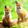 Little Fox's 🕊️🌸