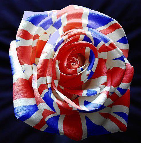 Brit Heart<33