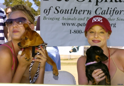 Hang Paws Animal Rescue and Adoption Event