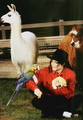 MJ and animal - michael-jackson photo