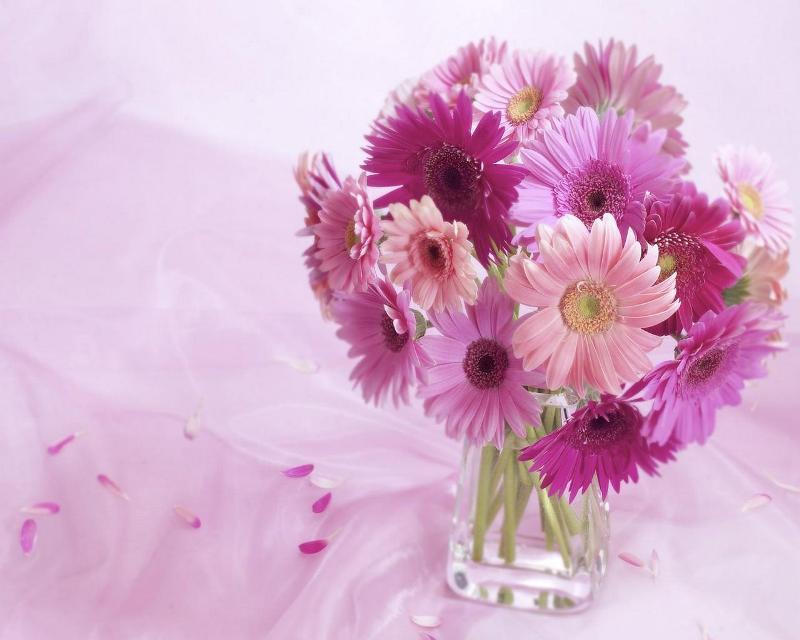 pink gerbera flowers wallpapers - photo #28