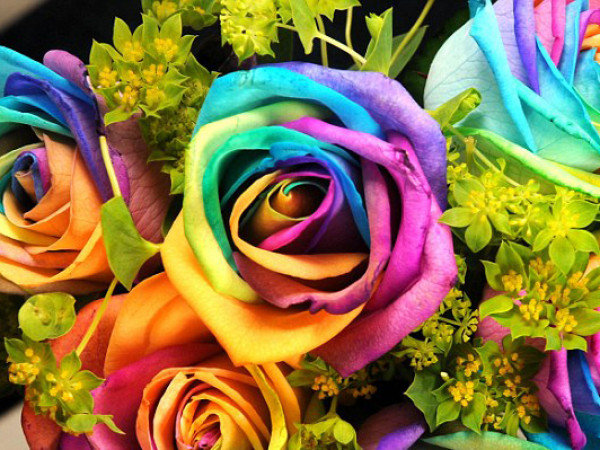 Pack of many rainbows images rainbow flowers wallpaper and for Where to get rainbow roses